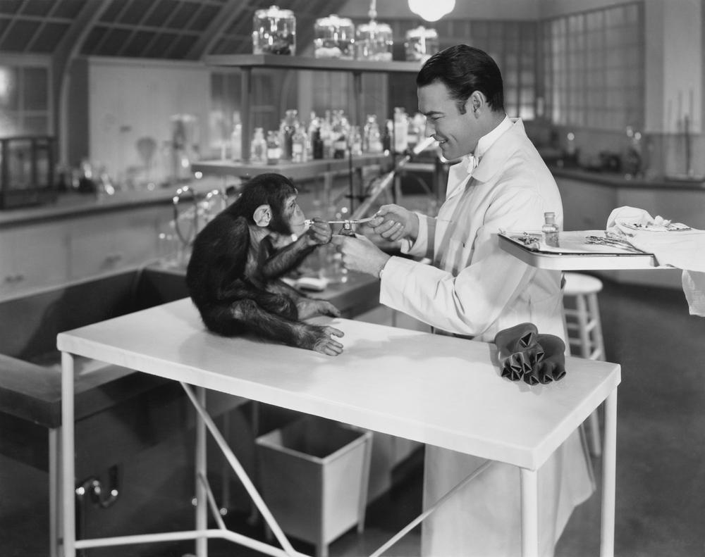 investigación animal