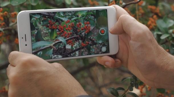 Cámara iPhone 6s Plus
