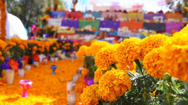 flores_de_cempasuchil_en_la_tradicion_mexicana