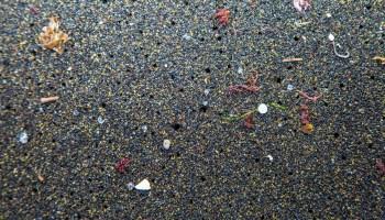 microplásticos y antibióticos