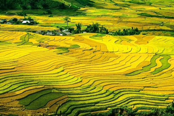 arroz-terrazas