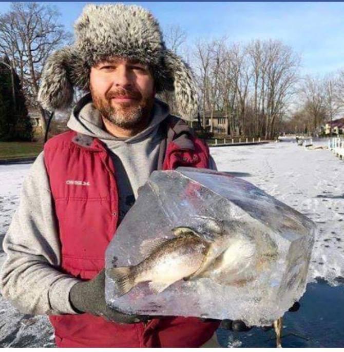 peces congelados