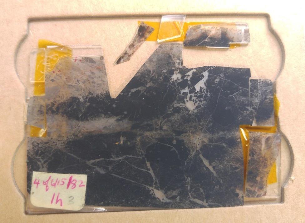 microfosil