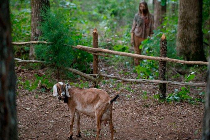 the walking dead animales