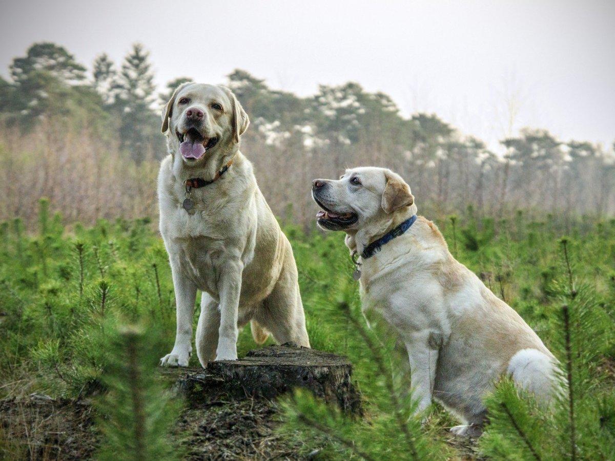 Perros conciencia de su cuerpo