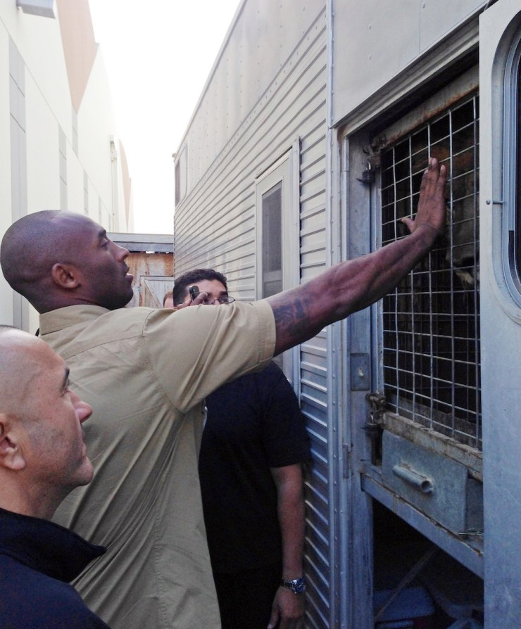 **EXCLUSIVE** BLACK MAMBA TAKES ON A LION! Kobe Bryant gets up close and personal to a lion on the set of a commercial for Turkish Airlines