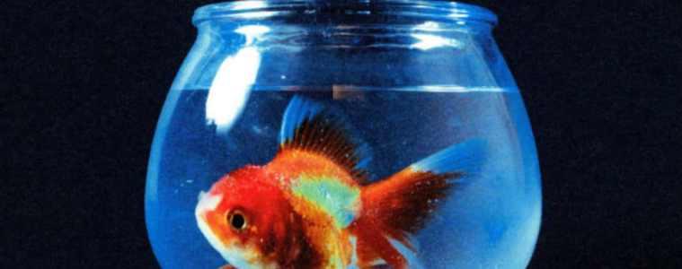 Big Fish Théory, le deuxième album de Vince Staples comme un poisson dans l'eau