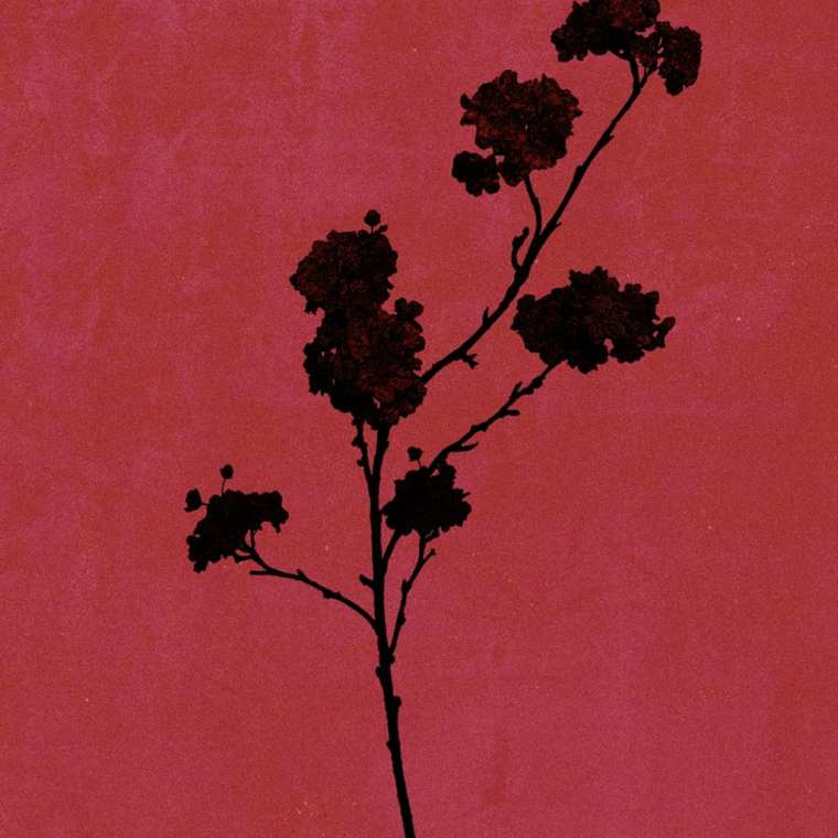 MISO - Take Me (album cover)
