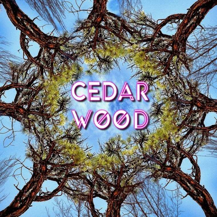 CedarWOOD - See The WOOD Vol. 1 (cover art)