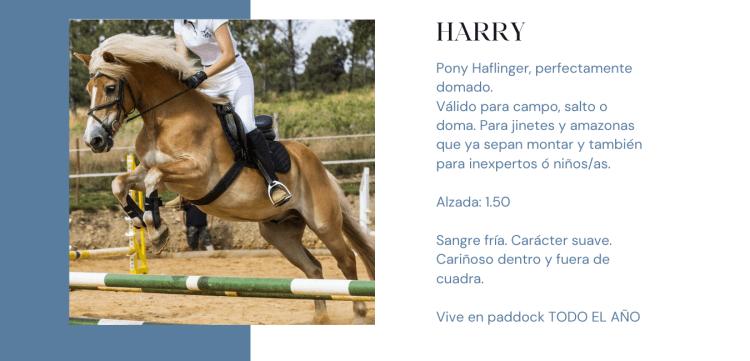 Pony Haflinger propiedad de Hípica Prado Ventura en As Pontes