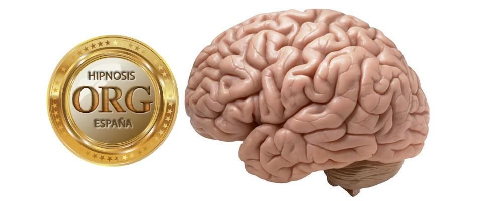 hipnosis-y-cerebro-humano