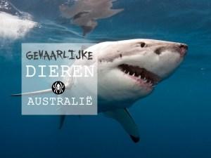 Gevaarlijke dieren Australië