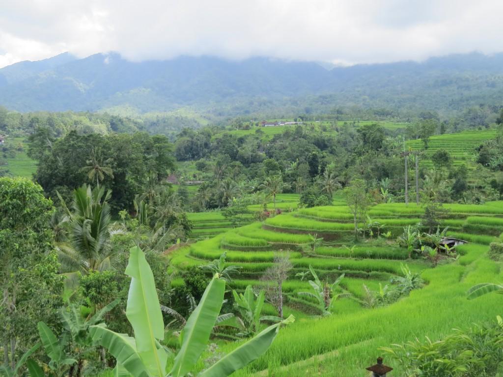 Landschap-van-Bali