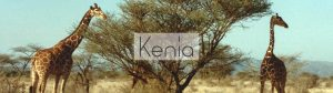 Kenia header