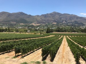 Wijngebieden Zuid-Afrika