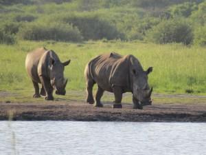 Wildlife spotten Namibië