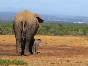 terugblik op zuidelijk Afrika