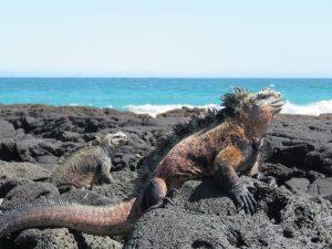 foto's galapagos