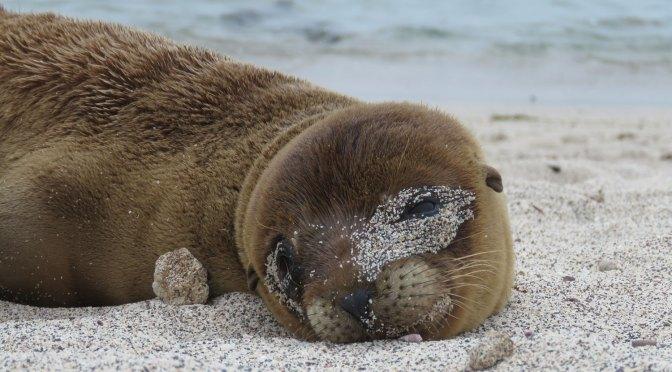 12 X Gratis doen op de Galapagos Eilanden