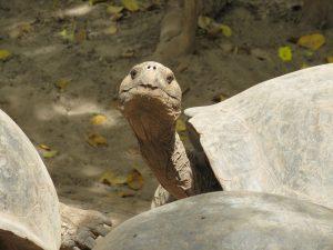 Reisgids Galapagos Ecuador