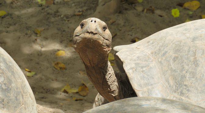 Reisgids voor de Galapagos Eilanden