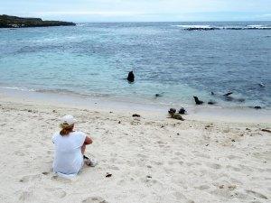 Zeehonden op de galapagos
