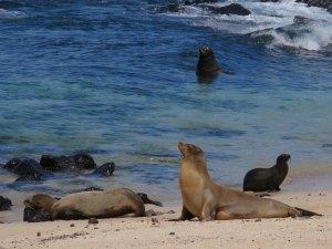 La Loberia San Cristobal Galapagos