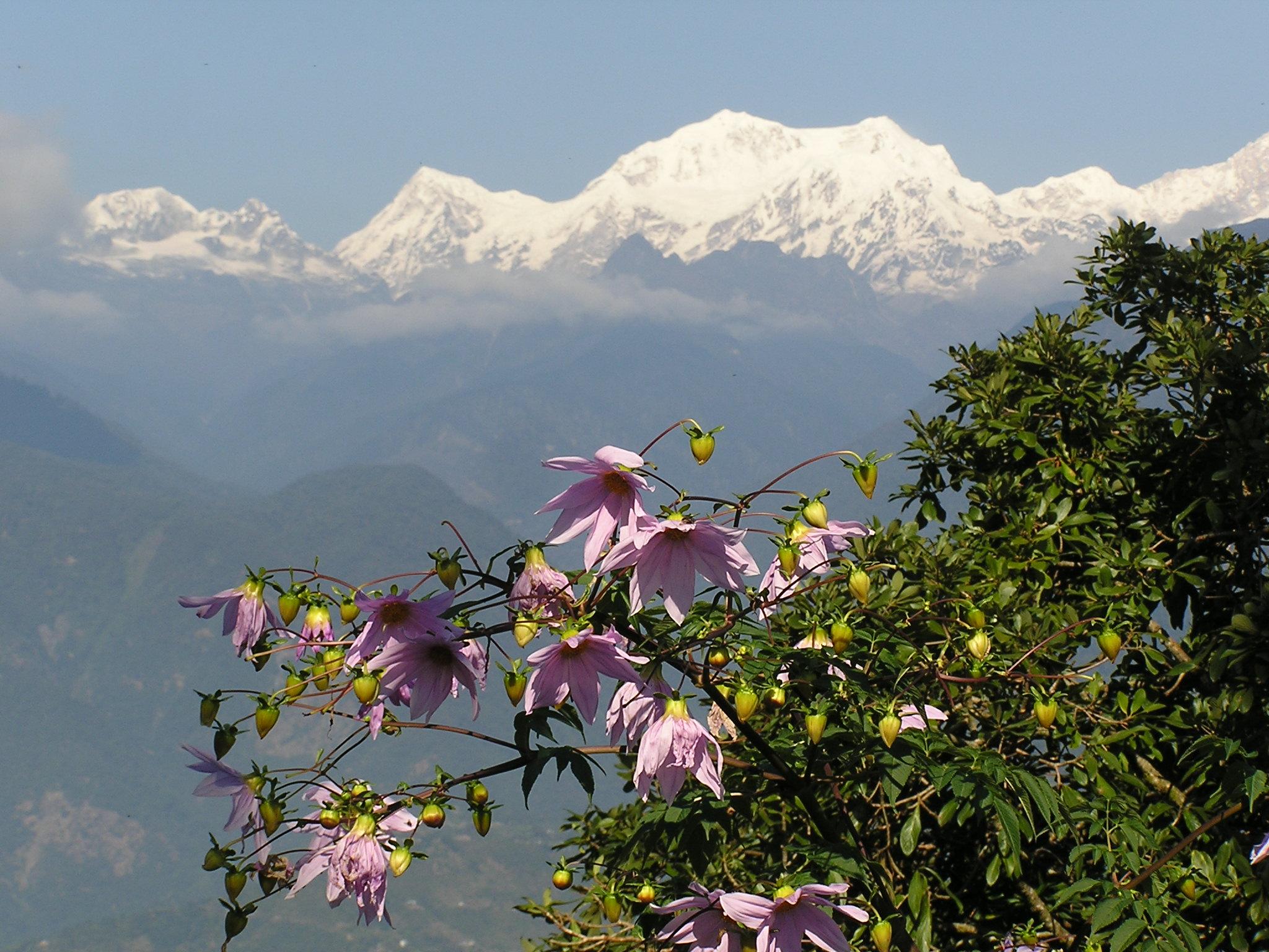 sikkim kanchenjunga india