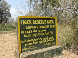 Mudumalai Tiger Reserve Ooty India