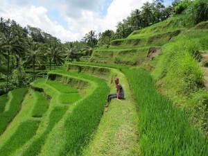 Rijstvelden van Tegalagang bij Ubud Bali