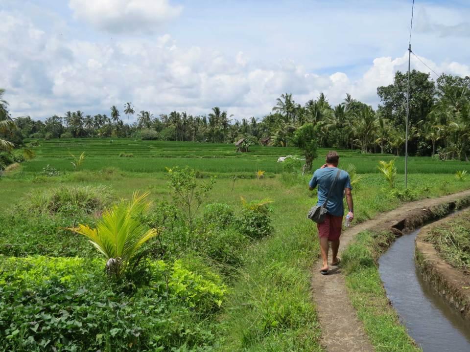 Wandeling door rijstvelden bij Ubud Bali