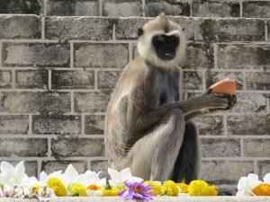 Aap offers Anuradhapura Sri Lanka