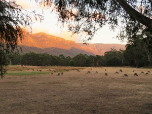 Halls Gap Lake side camping the grampians Australië