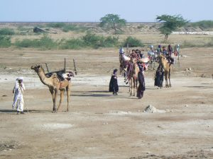 Rabari nomaden in Gujarat India