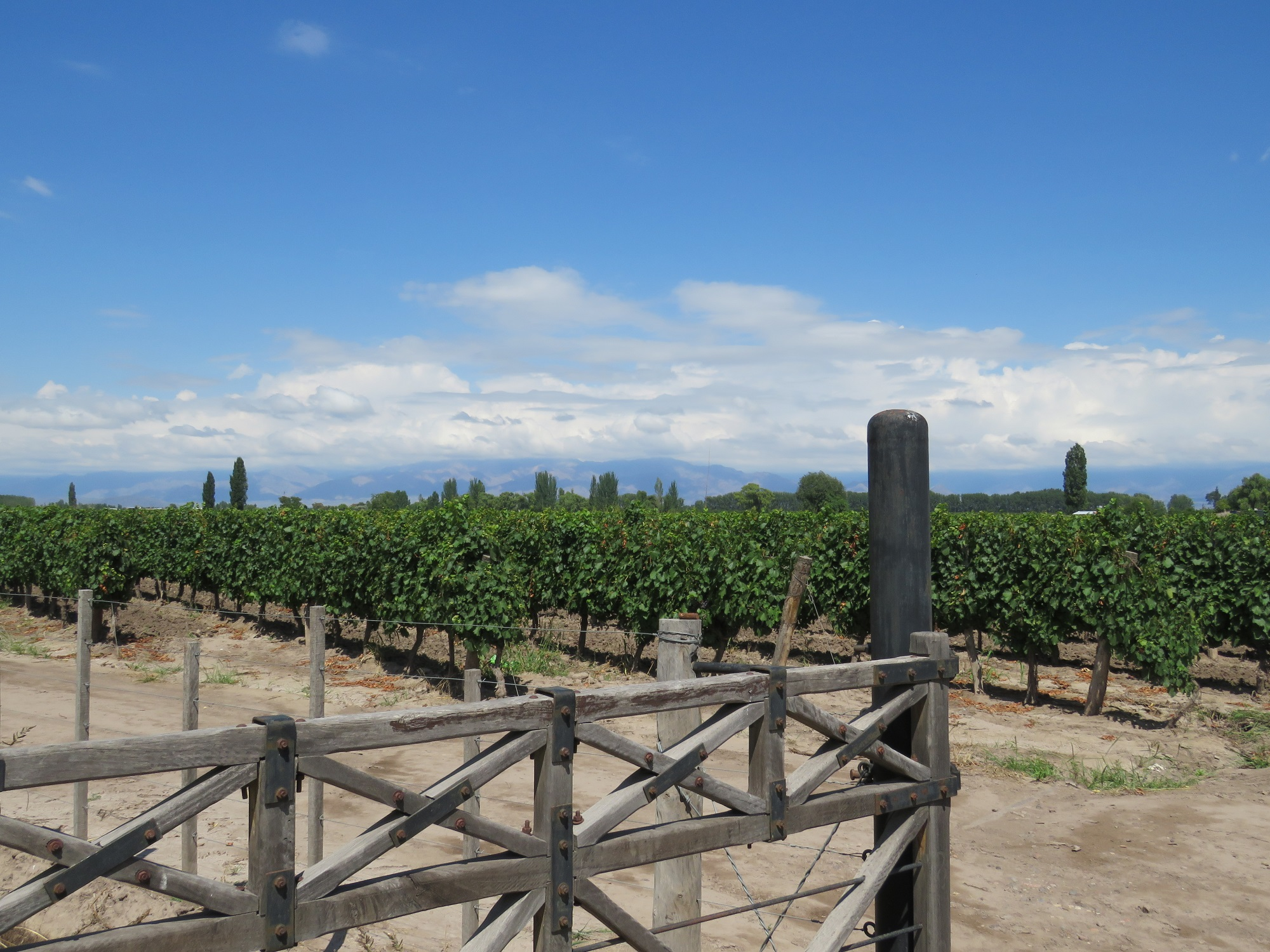 Wijn proeven in Argentinië