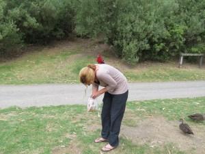 Vogels voeren op Kennett River Australië