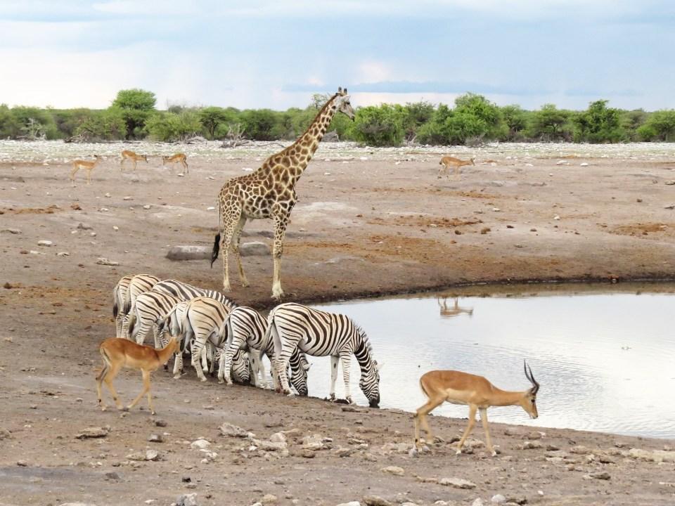 Etosha National Park Namibië