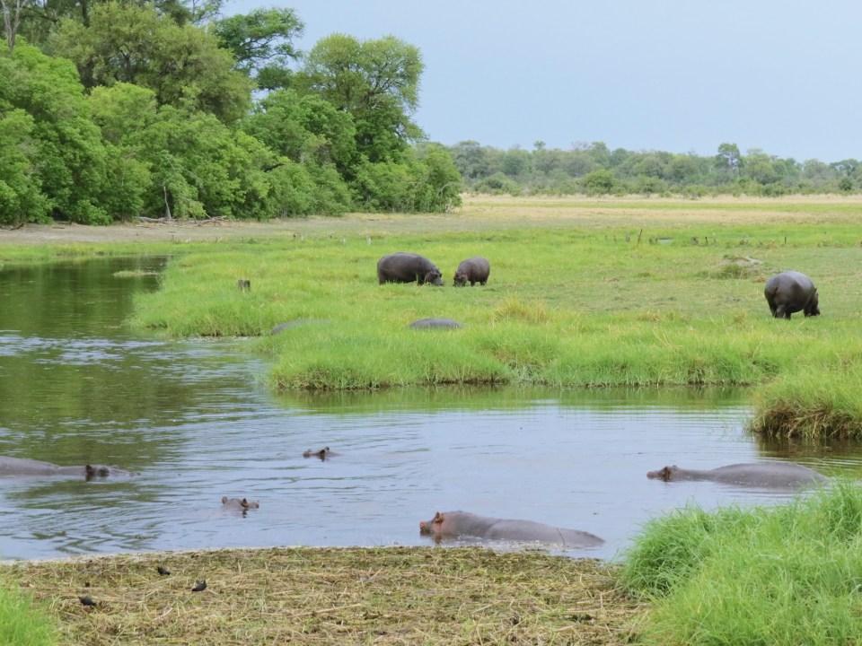 Moremi National Park Botswana