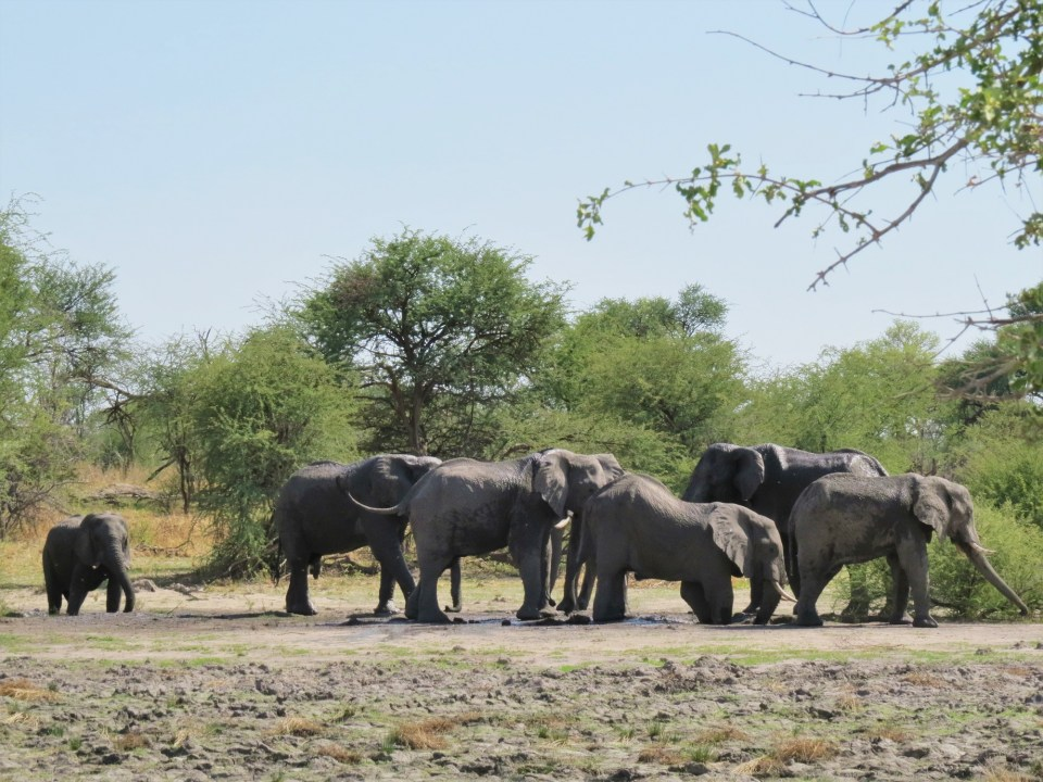Olifanten in Moremi NP Botswana