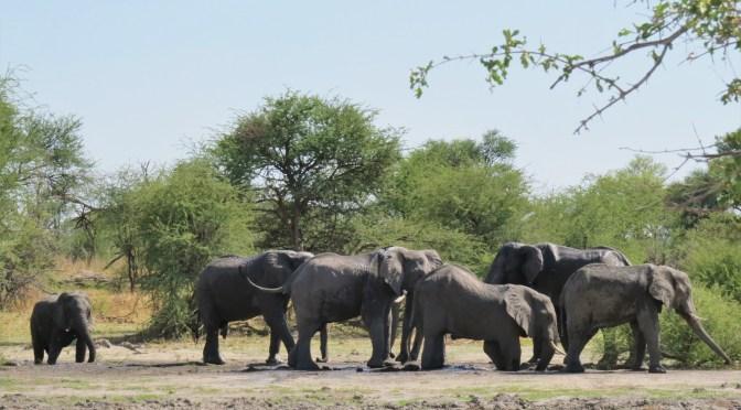 10 Redenen om naar Botswana te gaan