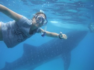 Walvishaaien in de Filipijnen
