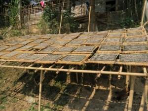 Snack-van-rivierwier-Laos