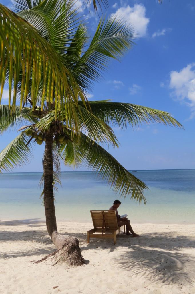 Palmboompje strand turquoise zee paradijs