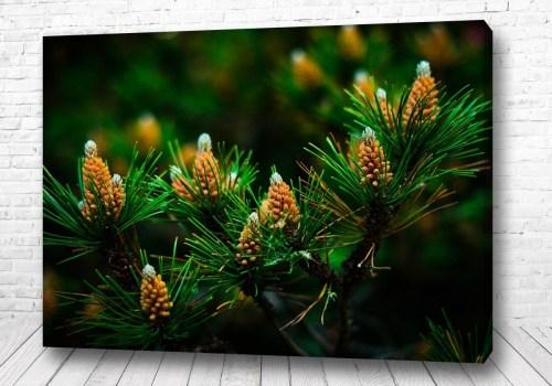 Постер Шишки в лесу