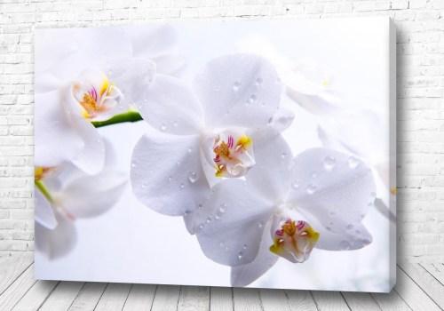 Постер Белая красота