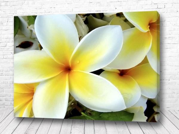 Постер Плюмерия цветы