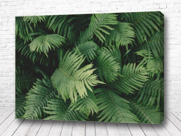 Постер Зелёные скандинавский папоротник