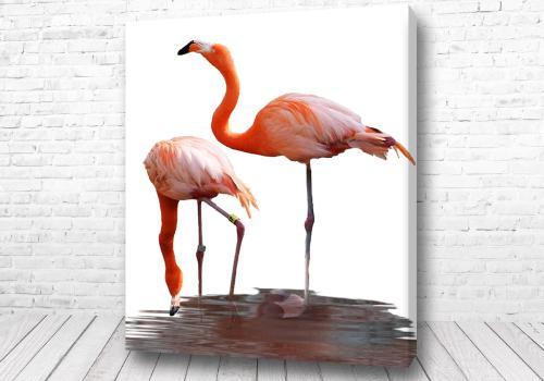 Постер Великолепные фламинго