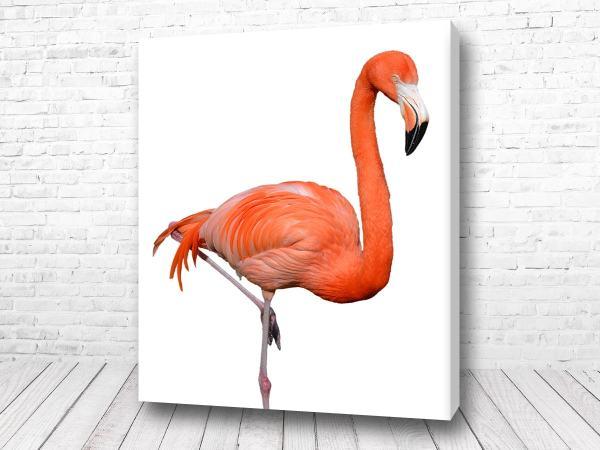 Постер Восхитительный фламинго