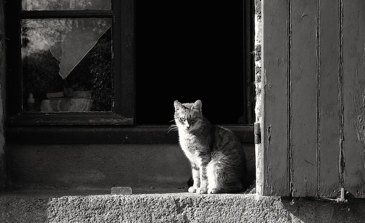 Buying a House in Burgundy, HiP Paris Blog, Photo by Nebojsa Mladjenovic